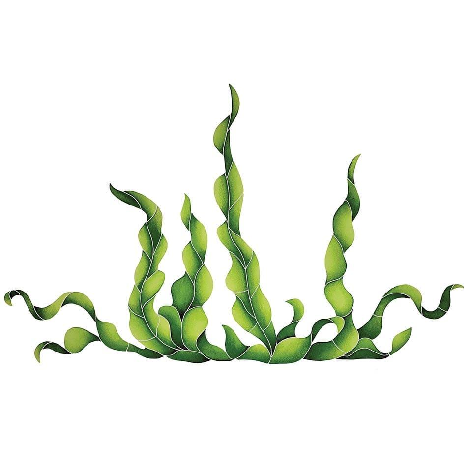 Seaweed-lg